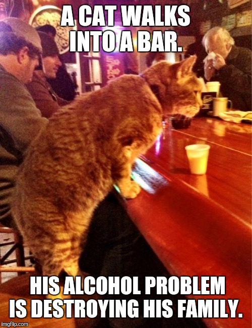 Anti joke cat | A CAT WALKS INTO A BAR. HIS ALCOHOL PROBLEM IS DESTROYING HIS FAMILY. | image tagged in cat bar drinking,anti joke | made w/ Imgflip meme maker