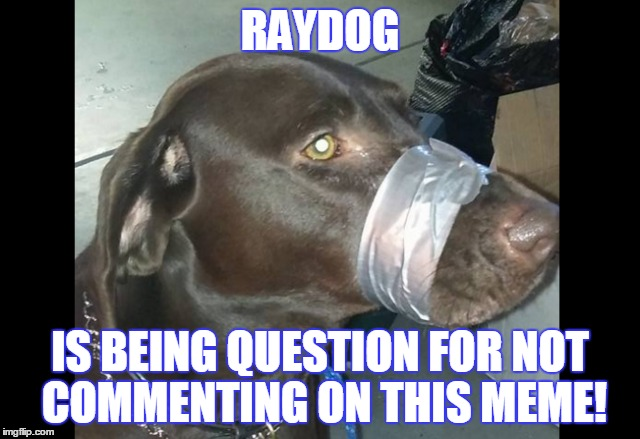 RAYDOG IS BEING QUESTION FOR NOT COMMENTING ON THIS MEME! | made w/ Imgflip meme maker