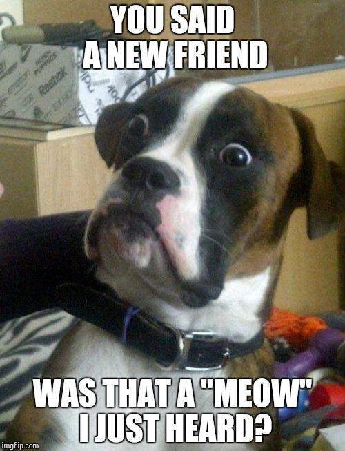 "Blankie the Shocked Dog | YOU SAID A NEW FRIEND WAS THAT A ""MEOW"" I JUST HEARD? 