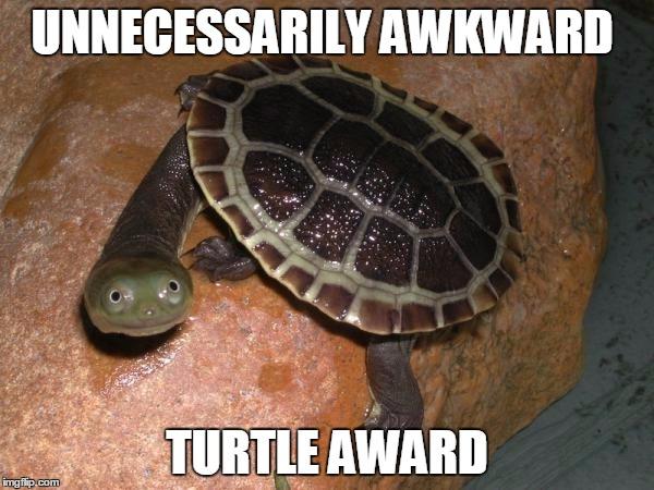 11mjn7 turtle meme meme generator imgflip,Turtle Meme Generator