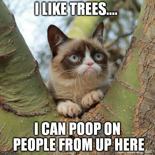 I LIKE TREES.... I CAN POOP ON PEOPLE FROM UP HERE | made w/ Imgflip meme maker