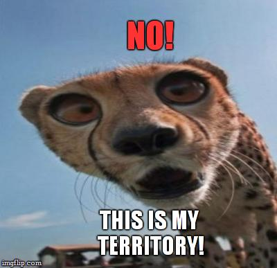 NO! THIS IS MY TERRITORY! | made w/ Imgflip meme maker
