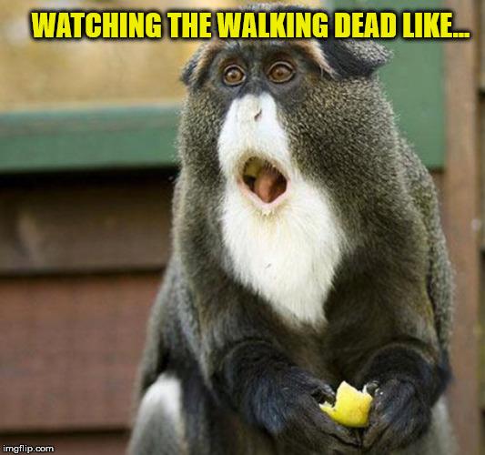 11ni9t thewalkingdead imgflip,Dead Monkey Meme