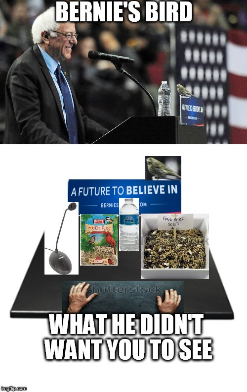 Free Bird Seed |  BERNIE'S BIRD; WHAT HE DIDN'T WANT YOU TO SEE | image tagged in bird,politics | made w/ Imgflip meme maker