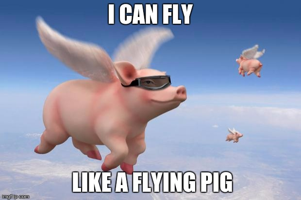 Flying Pigs Imgflip