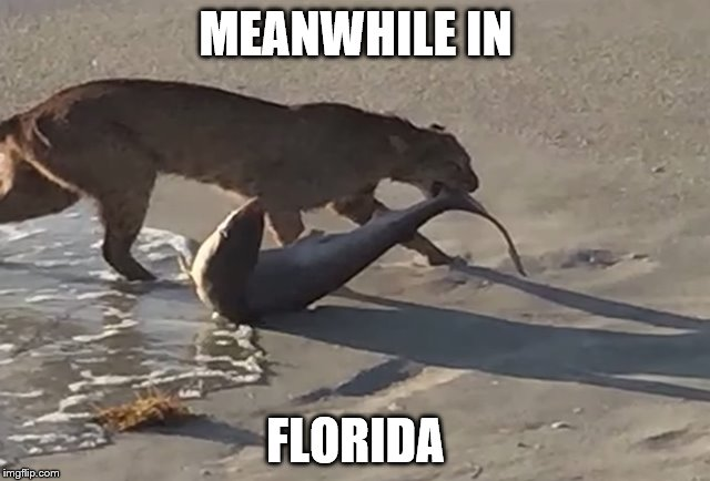 11ozve meanwhile in florida imgflip