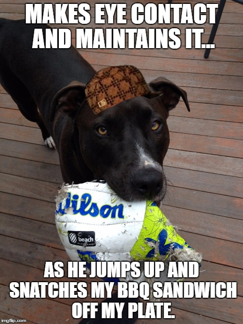 scumbag dog | MAKES EYE CONTACT AND MAINTAINS IT... AS HE JUMPS UP AND SNATCHES MY BBQ SANDWICH OFF MY PLATE. | image tagged in scumbag dog,scumbag,AdviceAnimals | made w/ Imgflip meme maker