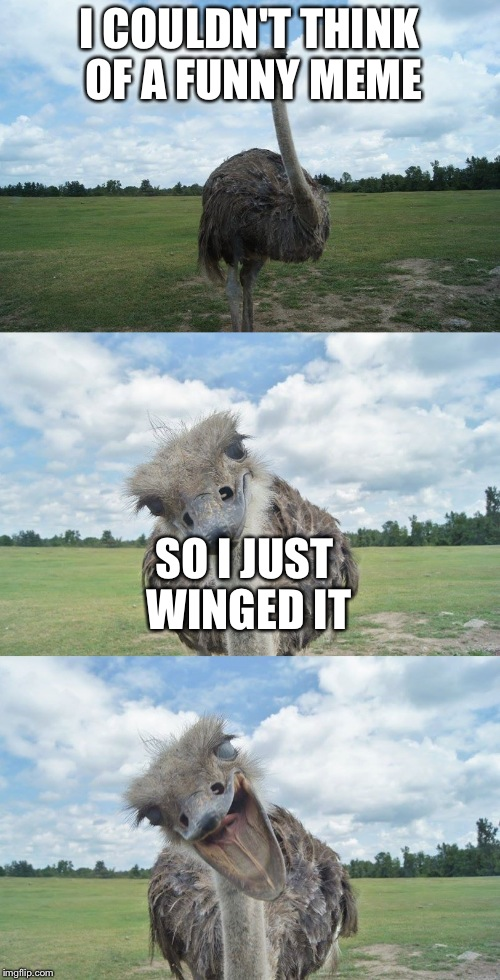 Bad Pun Ostrich | I COULDN'T THINK OF A FUNNY MEME SO I JUST WINGED IT | image tagged in bad pun ostrich | made w/ Imgflip meme maker