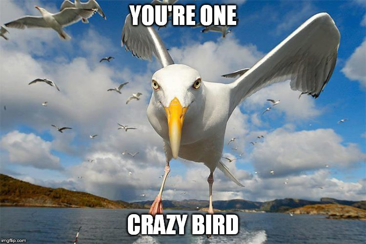 YOU'RE ONE CRAZY BIRD | made w/ Imgflip meme maker