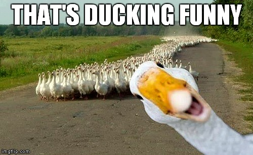 THAT'S DUCKING FUNNY | made w/ Imgflip meme maker
