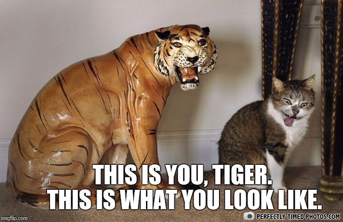 Cat mocking tiger statue licking fur | THIS IS YOU, TIGER.       THIS IS WHAT YOU LOOK LIKE. | image tagged in cat mocking tiger statue licking fur | made w/ Imgflip meme maker
