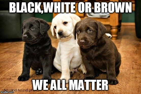 BLACK,WHITE OR BROWN WE ALL MATTER | made w/ Imgflip meme maker