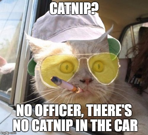 Fear And Loathing Cat Meme | CATNIP? NO OFFICER, THERE'S NO CATNIP IN THE CAR | image tagged in memes,fear and loathing cat | made w/ Imgflip meme maker