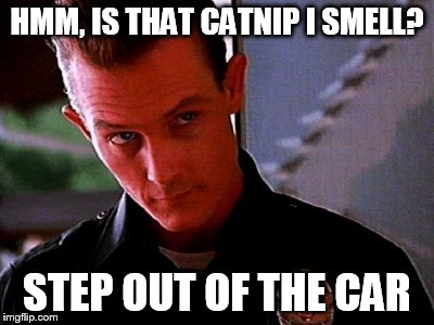 police | HMM, IS THAT CATNIP I SMELL? STEP OUT OF THE CAR | image tagged in police | made w/ Imgflip meme maker