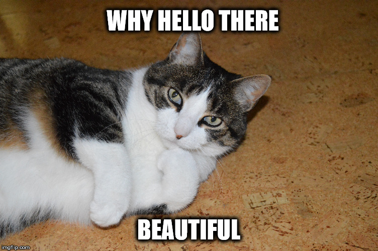 Sexy Cat |  WHY HELLO THERE; BEAUTIFUL | image tagged in cat,cute cat,cute pose,hello,beautiful,my cat | made w/ Imgflip meme maker