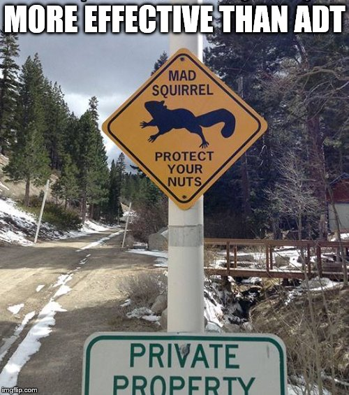 And A Better Love Story Than Twilight | MORE EFFECTIVE THAN ADT | image tagged in funny,funny road signs,squirrels | made w/ Imgflip meme maker