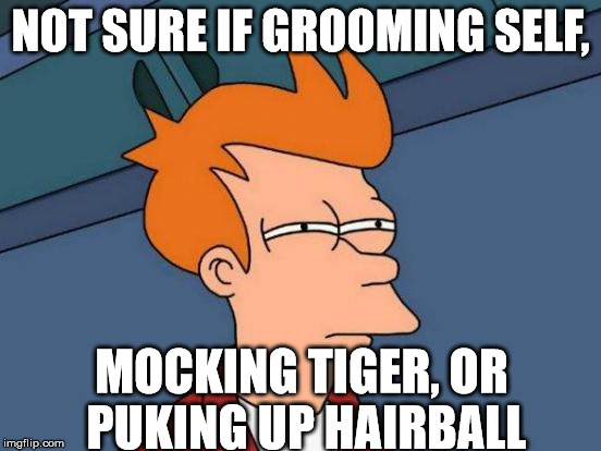 Futurama Fry Meme | NOT SURE IF GROOMING SELF, MOCKING TIGER, OR PUKING UP HAIRBALL | image tagged in memes,futurama fry | made w/ Imgflip meme maker