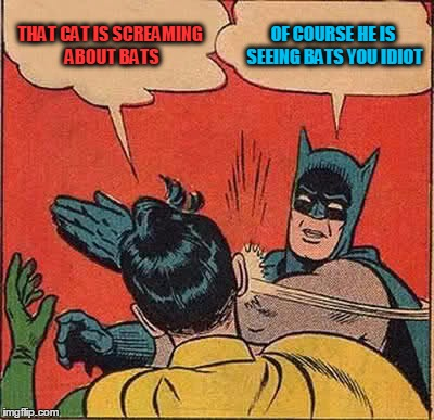 Batman Slapping Robin Meme | THAT CAT IS SCREAMING ABOUT BATS OF COURSE HE IS SEEING BATS YOU IDIOT | image tagged in memes,batman slapping robin | made w/ Imgflip meme maker