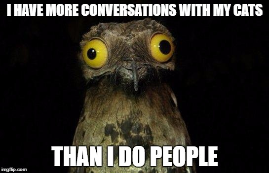11utsg crazy eyed bird meme generator imgflip