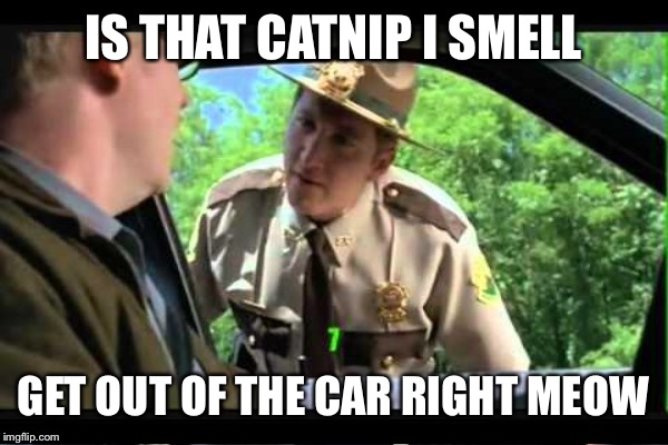IS THAT CATNIP I SMELL GET OUT OF THE CAR RIGHT MEOW | made w/ Imgflip meme maker