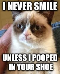 Grumpy Cat Happy Meme | I NEVER SMILE UNLESS I POOPED IN YOUR SHOE | image tagged in grumpy cat smile | made w/ Imgflip meme maker