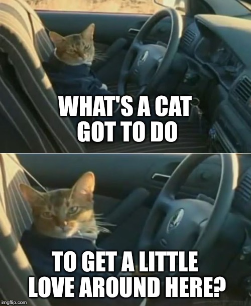 Boat Cat in Car | WHAT'S A CAT GOT TO DO TO GET A LITTLE LOVE AROUND HERE? | image tagged in boat cat in car | made w/ Imgflip meme maker