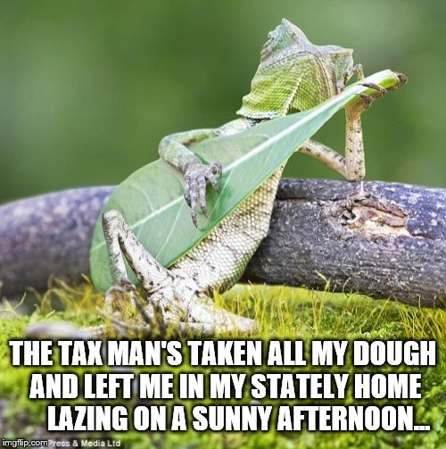 This always comes to mind when I see this picture... | THE TAX MAN'S TAKEN ALL MY DOUGH AND LEFT ME IN MY STATELY HOME      LAZING ON A SUNNY AFTERNOON... | image tagged in lizard music,memes,music,the kinks,sunny afternoon,60s music | made w/ Imgflip meme maker