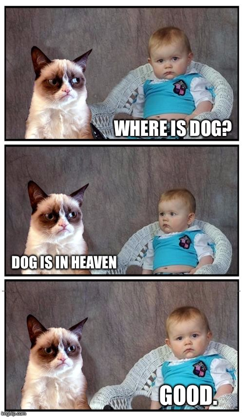 Grumpy Baby | WHERE IS DOG? DOG IS IN HEAVEN GOOD. | image tagged in dad joke cat,memes,i'm sorry | made w/ Imgflip meme maker