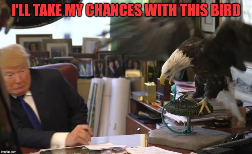 I'LL TAKE MY CHANCES WITH THIS BIRD | made w/ Imgflip meme maker