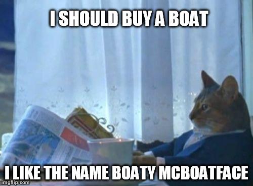 Cat I Should Buy A Boat Gif