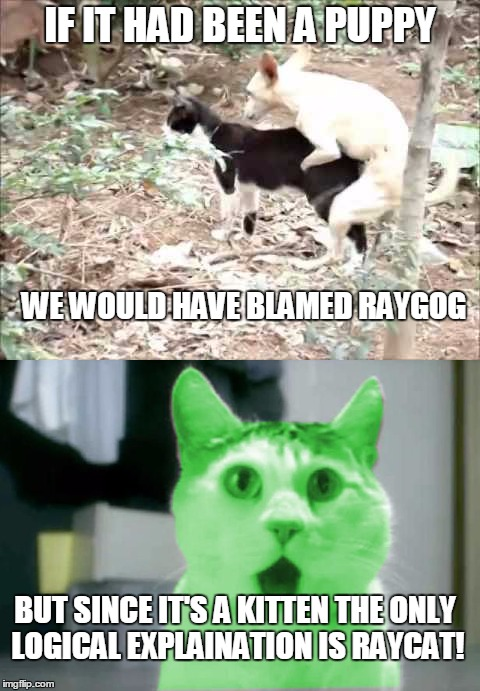 IF IT HAD BEEN A PUPPY WE WOULD HAVE BLAMED RAYGOG BUT SINCE IT'S A KITTEN THE ONLY LOGICAL EXPLAINATION IS RAYCAT! | made w/ Imgflip meme maker