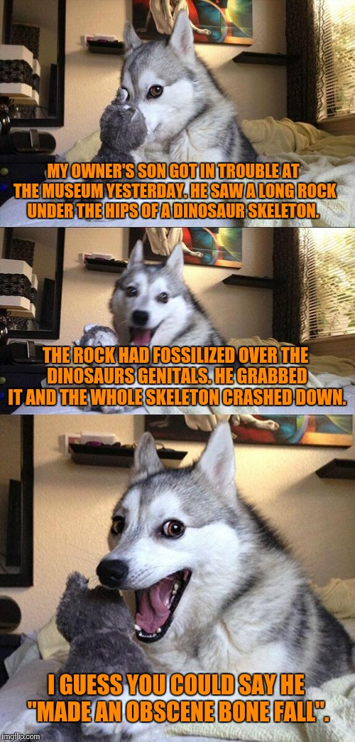 Bad Pun Dog | MY OWNER'S SON GOT IN TROUBLE AT THE MUSEUM YESTERDAY. HE SAW A LONG ROCK UNDER THE HIPS OF A DINOSAUR SKELETON. THE ROCK HAD FOSSILIZED OVE | image tagged in memes,bad pun dog,owner,dinosaur,skeleton,boner | made w/ Imgflip meme maker