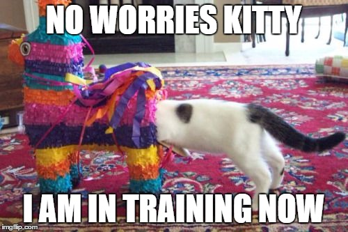 NO WORRIES KITTY I AM IN TRAINING NOW | made w/ Imgflip meme maker