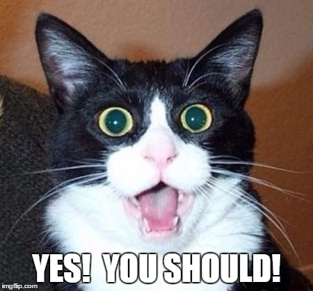 whoa cat | YES!  YOU SHOULD! | image tagged in whoa cat | made w/ Imgflip meme maker