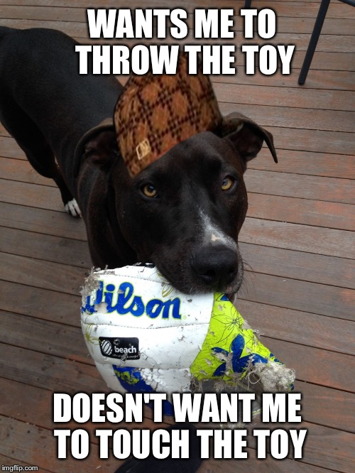 scumbag dog | WANTS ME TO THROW THE TOY DOESN'T WANT ME TO TOUCH THE TOY | image tagged in scumbag dog,scumbag,AdviceAnimals | made w/ Imgflip meme maker