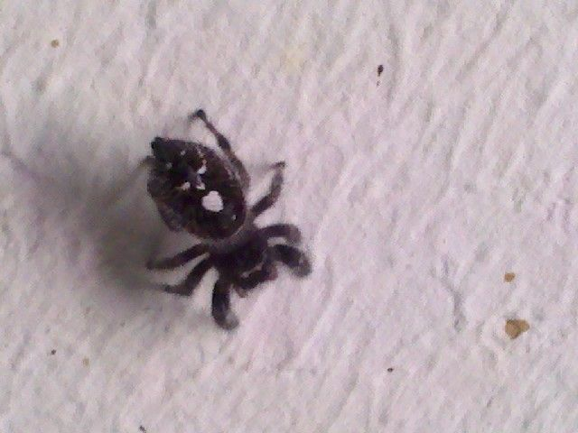 If you see it... | image tagged in animals,funny,spiders