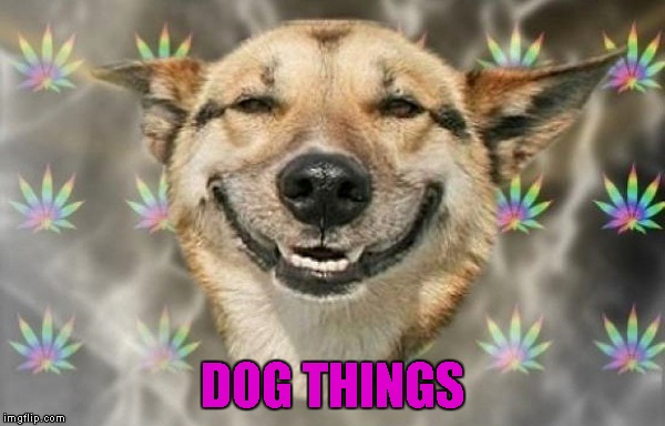 DOG THINGS | made w/ Imgflip meme maker