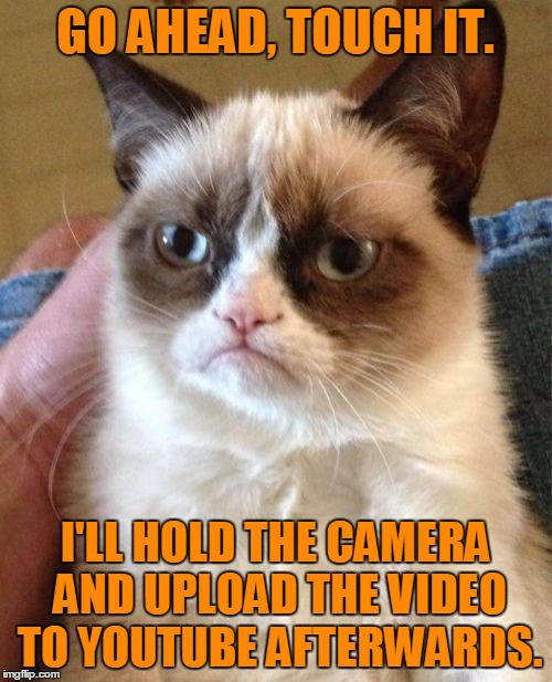 Grumpy Cat Meme | GO AHEAD, TOUCH IT. I'LL HOLD THE CAMERA AND UPLOAD THE VIDEO TO YOUTUBE AFTERWARDS. | image tagged in memes,grumpy cat | made w/ Imgflip meme maker