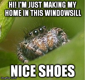 Misunderstood Spider | HI! I'M JUST MAKING MY HOME IN THIS WINDOWSILL NICE SHOES | image tagged in misunderstood spider | made w/ Imgflip meme maker