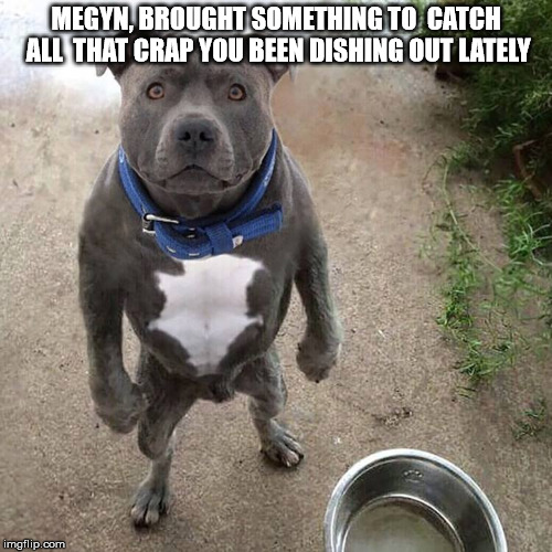 Funny pitbull pictures with words