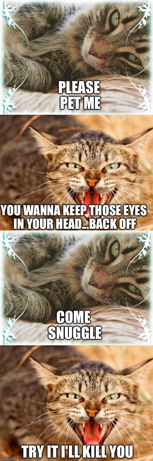 Feline styling thug life | PLEASE PET ME TRY IT I'LL KILL YOU COME SNUGGLE YOU WANNA KEEP THOSE EYES IN YOUR HEAD...BACK OFF | image tagged in memes,funny,funny cat memes | made w/ Imgflip meme maker