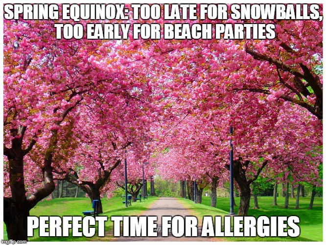 SPRING EQUINOX:TOO LATE FOR SNOWBALLS, TOO EARLY FOR BEACH PARTIES PERFECT TIME FOR ALLERGIES | image tagged in funny memes | made w/ Imgflip meme maker