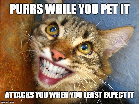 You Crazy Cat Meme
