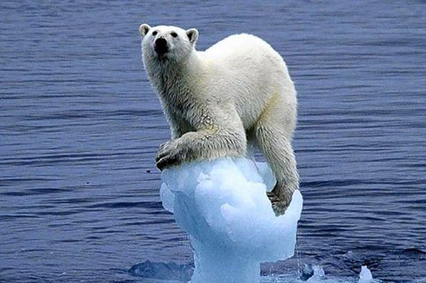 Polar bear climate change Blank Template - Imgflip
