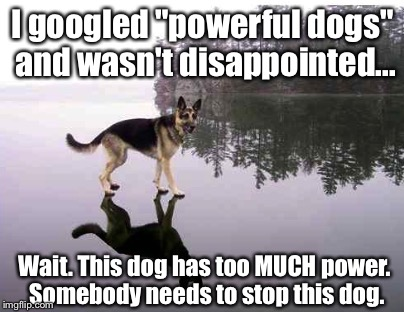 "Oh, Google. How I love thee. Let me count the ways... |  I googled ""powerful dogs"" and wasn't disappointed... Wait. This dog has too MUCH power. Somebody needs to stop this dog. 