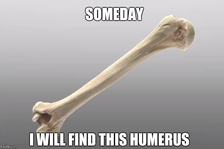 But not today | SOMEDAY I WILL FIND THIS HUMERUS | image tagged in memes,funny | made w/ Imgflip meme maker