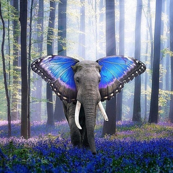Butterfly ear elephant Blank Template - Imgflip