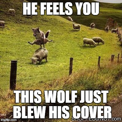 HE FEELS YOU THIS WOLF JUST BLEW HIS COVER | made w/ Imgflip meme maker