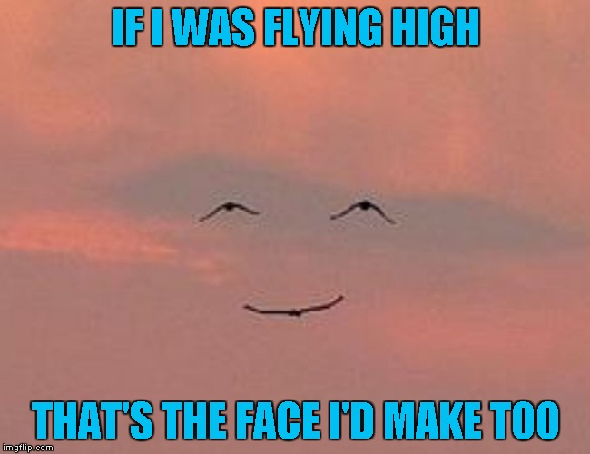 I don't know about the rest of you, but I would love to be able to fly! | IF I WAS FLYING HIGH THAT'S THE FACE I'D MAKE TOO | image tagged in high fly smile,funny animals,memes,birds,funny,bird face | made w/ Imgflip meme maker