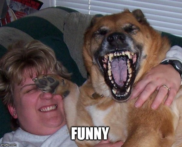 laughing dog | FUNNY | image tagged in laughing dog | made w/ Imgflip meme maker